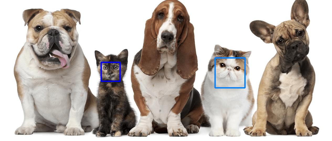 VISIONARY_cats_LBP_HOG_dog